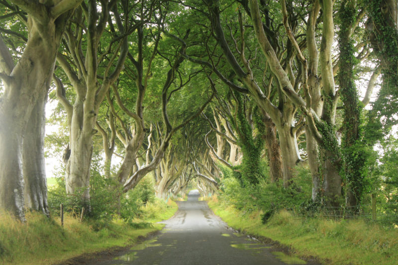 The Dark Hedges - County Antrim