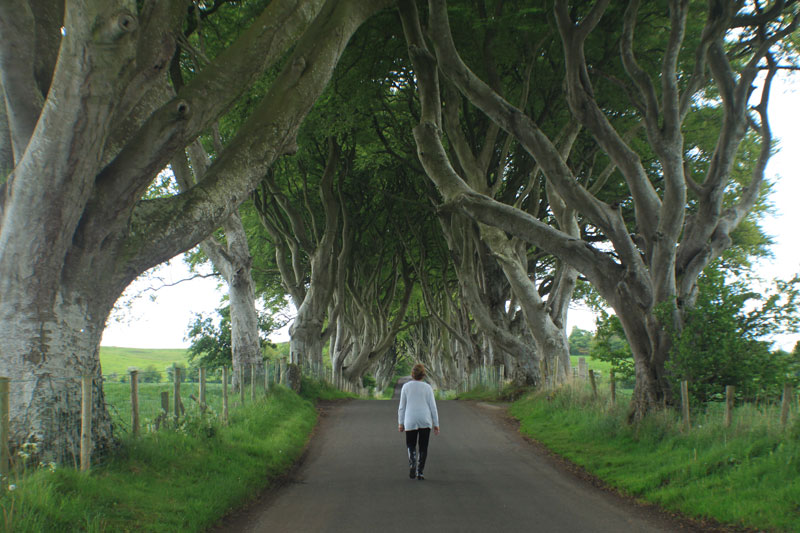 darkhedges3