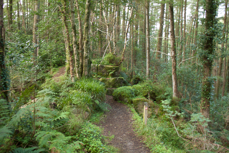 Path leading to St. Patrick's Chair